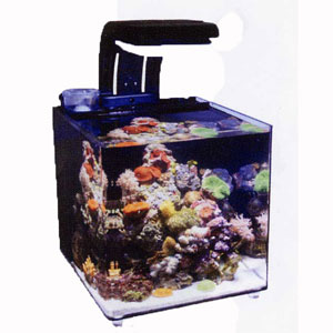 30 gallon fish tank in litres tank for Micro fish tank